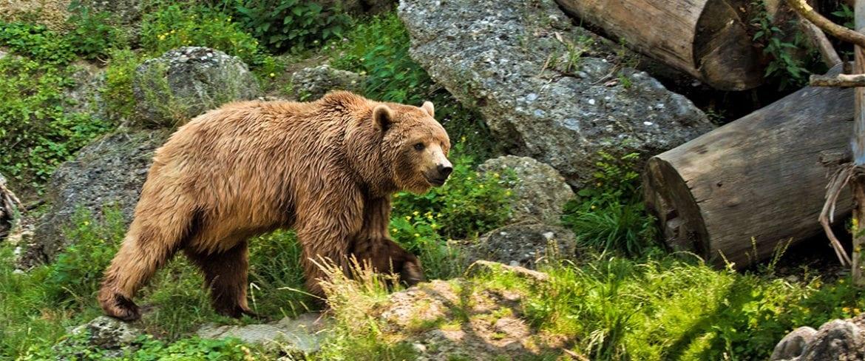 Zoos & Tiergärten - Ausflugsziel im Salzburger Land